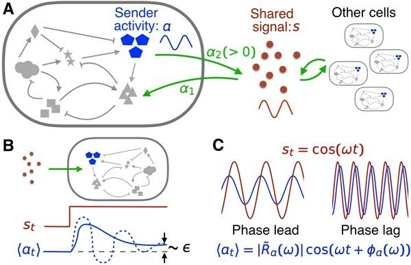 Emergence of collective oscillations in adaptive cells